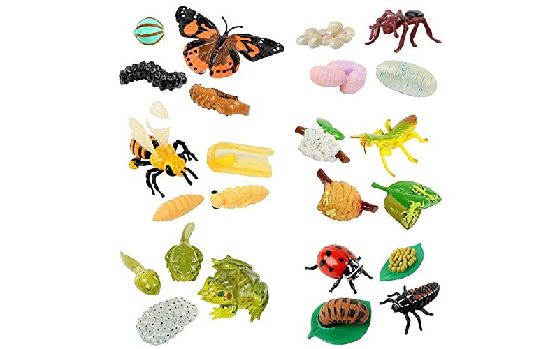 Insect Lore Life Cycle Stages Complete Set